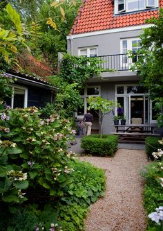 small garden with Hydrangea, boxwood, fig trees, and grapes as climbers