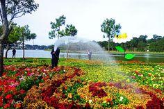 Làng Hoa Hà Đông | Dalat Tours  GIÁ: 230.000 VND/KHÁCH