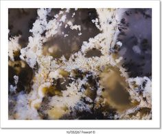 """Agate With Fossils"" - Art Print from FreeArt.com"