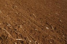 How to Make a Yard Ready to Plant Grass Seed