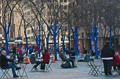 Blue Trees Seattle