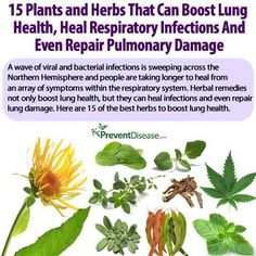 herbs for lung health