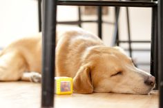 mon chien Sammy Nikon D3000, 50mm f1.8, 1/50s iso400 Nikon D3000, F1, Photography Ideas, Photos, Dogs, Dog, Pictures, Pet Dogs, Photoshoot Ideas