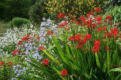 Jardines llenos de color: Toda una Fantasía!!! | Cuidar de tus plantas es facilisimo.com