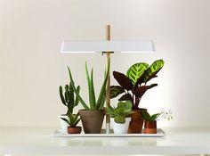 Lampe + Plantes