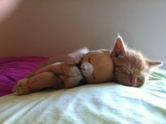 Caroline F.'s rescue kitty, Anders. Anders has made friends with this sleepy stuffed animal. It makes the perfect naptime companion, and we see Anders agrees.