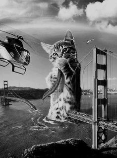 Cat in the city!!!
