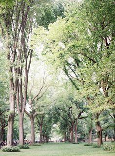 Central Park | Jen Huang