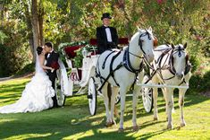Wedding horse and carriage -- red and white carriage, white horses