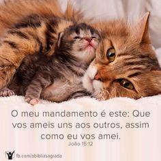 O meu mandamento é este: Que vos ameis uns aos outros, assim como eu vos amei. João 15:12