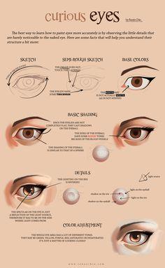 "drawingden: ""Eye tutorial [ENGLISH] by sadiek "" Eye Drawing Tutorials, Digital Painting Tutorials, Digital Art Tutorial, Drawing Tips, Art Tutorials, Eye Tutorial, Photoshop Tutorial, Art Reference Poses, Anatomy Reference"
