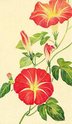 Morning glories, by Shinobu Nakazawa Botanical Flowers, Botanical Prints, Watercolor Flowers, Watercolor Paintings, Morning Glory Flowers, Art Floral, Fabric Painting, Vintage Flowers, Asian Art