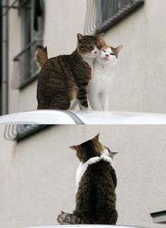 cute cats couple in love