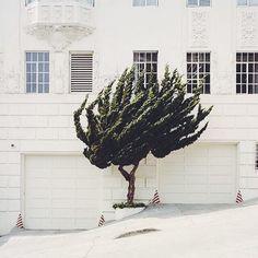 California Topiaries by Marc Alcock @marcalcock #dcnphotography #dcngreen