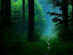 Beautiful forest scene