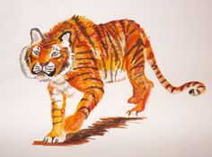 Tiger water color doodle