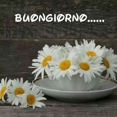 Immagini frasi Buongiorno con fiori margherite Good Morning Good Night, Good Morning Quotes, Morning Coffee, Coffee Cups, Decoupage, Facebook, Phrases In Italian, Good Morning Wishes, Life