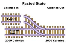 """Share the post """"The Fed and the Fasted State"""" FacebookTwitterGoogle+E-mail In order to understand how the body gains and loses weight, you must understand how it uses energy. The body really only exists in one of two states – the … Continued"""