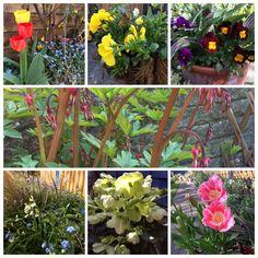 April colour in the garden.