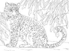 amur leopard coloring page