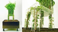 Growing Chair-Creative Design Inspired by Nature