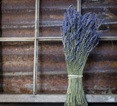 DRIED LAVENDER lavender bokay wedding lavender dried lavender  This dried lavender is the best Ive seen! Its ready to be used on a drying rack, in a vase, making potpourri, lavender bags, wedding favors, etc. I hang my lavender in my kitchen so that whenever I walk by I can enjoy its fragrance. Best kept indoors out of bright sunlight.  **SIZE**approximately 15 in length  ***IF YOU NEED IT SHIPPED EARLIER THAN THE SHIP DATE IN THE LISTING, PLEASE CONTACT ME.