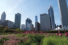 Standards from ASTM Committee E60 on Sustainability guide work on vegetative green roofs.