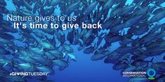 1 billion people depend on fish as their main protein source. It's time to give back! #GivingTuesday