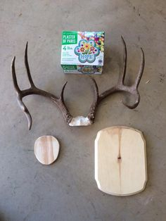 Whitetail Deer Antler Plaque Taxidermy Mount in 2020 ...