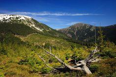 Krkonoše panorama