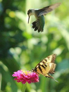 O colibri, a borboleta e a flor § Parece até título de romance...