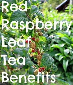 Red Rasberry. Best known for its replenishing, nourishing and healing benefits for the female body. It can help stabilize menstration, ease cramps, pms and acne. It taste excellant as well.
