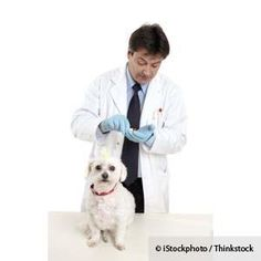 If you  vill your pet's medication at a retal pharmacy, beware - you need to see this link http://healthypets.mercola.com/sites/healthypets/archive/2013/01/11/retail-pharmacy-errors.aspx