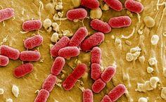 La clasificación pone de manifiesto la amenaza que suponen las bacterias gramnegativas resistentes a múltiples antibióticos, con capacidad para resistir a los tratamientos