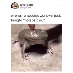 What an adorable testicle. - Funny Monkeys - Funny Monkeys meme - - What an adorable testicle. Monkeys Funny What an adorable testicle. Monkeys Funny The post What an adorable testicle. appeared first on Gag Dad. Cute Funny Animals, Funny Cute, The Funny, Funny Monkeys, Funny Video Memes, Funny Relatable Memes, Funny Posts, Stupid Funny, 9gag Funny