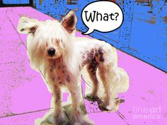This is the website of Steve Dunning. Shop for canvas prints, framed prints, posters, greeting cards, and more. Funny Dogs, Cute Dogs, Chinese Crested Dog, Framed Prints, Canvas Prints, Life Humor, Abstract Photography, Modern Art, Horses