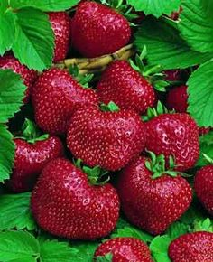 The strawberry is the only fruit with seeds on the outside -  there are about 200 on a medium-sized example