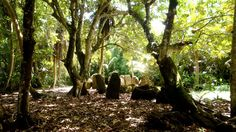 sacred space on the island of Rota... a well-preserved ancient latte stone village...loved it so much here!