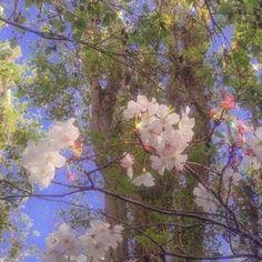 Spring Aesthetic, Cat Aesthetic, Nature Aesthetic, Flower Aesthetic, Aesthetic Images, Aesthetic Backgrounds, Aesthetic Iphone Wallpaper, Aesthetic Wallpapers, Nct Dream