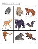 Forest Animals activities for Preschool Pre-K and Kindergarten