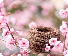 Spring blossom nest
