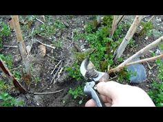 Bird Feeders, Good To Know, Garden Tools, Outdoor Decor, Plants, Animals, Youtube, Animales, Animaux