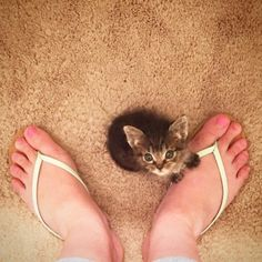生後1日で保護された子猫。引き取られた先で、新しいお母さんに出会うと… (10枚)|ペットフィルム -犬・猫・ペットの画像・動画まとめ petfilm.biz