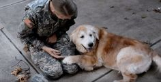WATCH HOW THIS DOG REACTS WHEN REUNITED WITH HER OWNER! PACK BUDDY REHABILITATES RESCUE/SHELTER DOGS TO SERVE AS SERVICE DOGS FOR CIVILIANS AND, FREE, FOR U.S. VETERANS. SAVE A DOG, SAVE A VETERAN. David Utter, Dog Trainer: Separation Anxiety, Service & Therapy Dogs, PTSD, Depression, Panic Attacks, Behavior Modification, Water Rescue, Obedience. Train and Board. (www.DogEvolution.us) (http://dogtrainingorangecountyca.com/)www.DavidUtter.com (www.Pack-buddy.com) 1-888-959-7463