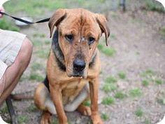 URGENT! Needs Rescue! German Shepherd Dog Mix Dog for adoption in Atlanta…