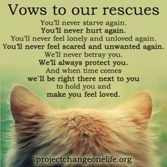 Vows to our rescues
