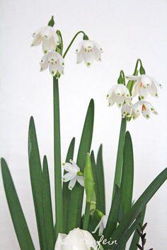 seidenfeins Blog vom schönen Landleben: Lieblingsblumen * lovely spring flowers