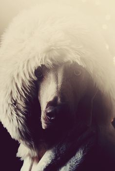 mamukh of the north, via Flickr.