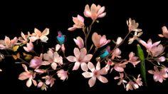 Allan Forsyth: Vivid Light #flower #flora #photography
