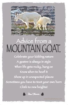 Each postcard says: Advice from a Mountain Goat Celebrate your kidding nature A goatee is always in style When life gets rocky, hang on Know when to hoof it Sho Advice Quotes, Life Advice, Good Advice, Life Quotes, Advice Cards, Nature Quotes, Spirit Animal Totem, Animal Spirit Guides, Animal Totems